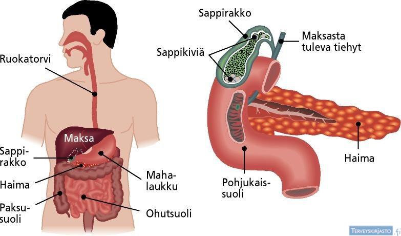 Raskaus vatsakipu oikealla